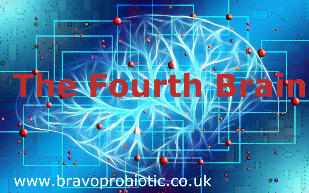 The Fourth Brain